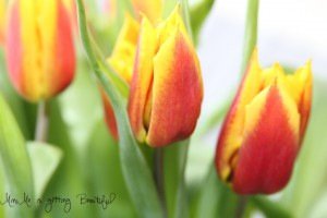 MiniMe is flowers